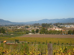 View from Viansa Winery Photo