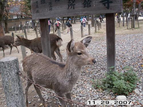 Awww! baby deer