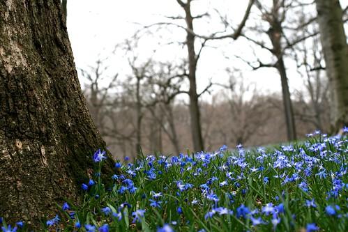 Geophytes blooming