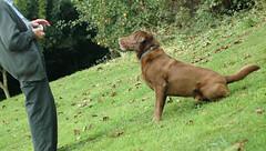 dog training - a steep learning curve