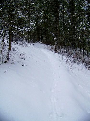 USFS trail # 223