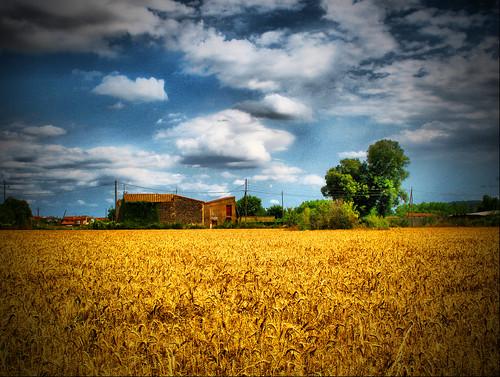 A Simple Rural Landscape