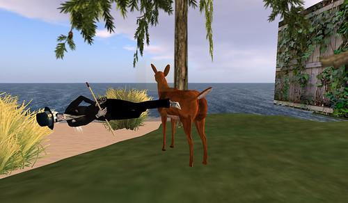 deer dancing