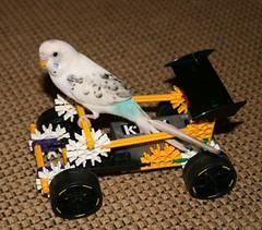 birdknex