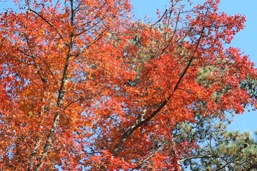 Autumn Goodness