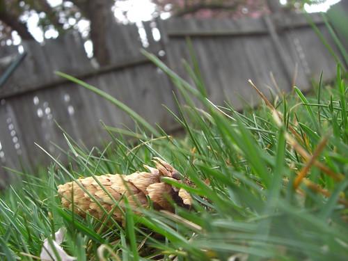 Backyard Musings - Neighborly Items