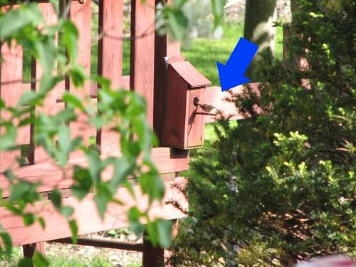 Bird moving in