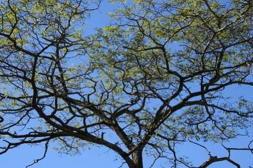 Close up of a a tree @ Jericho beach