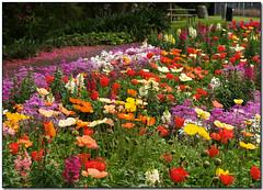 the flower gardens