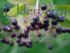 Elderberry Notecard