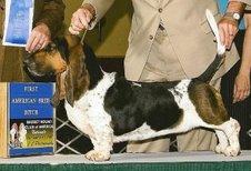 Kate Shugak, bassett hound