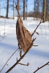 Moth Inside