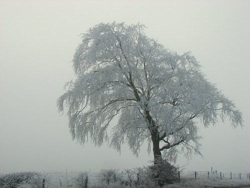 Freezing Fogged (1)