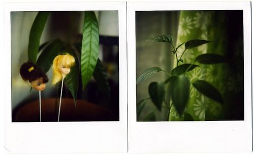 Mango and Pepper