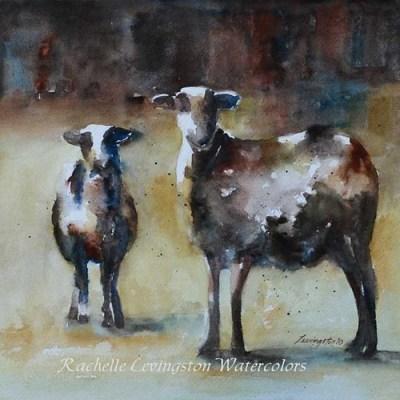 sheep in field rachellelevingston