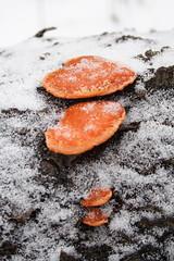 That Orange Fungus
