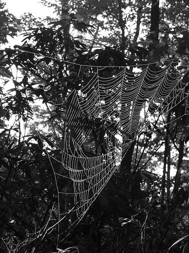 spider woods 2