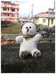Tutu, the teddy bear by Ayush Khadka