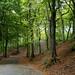 Boggarty woods