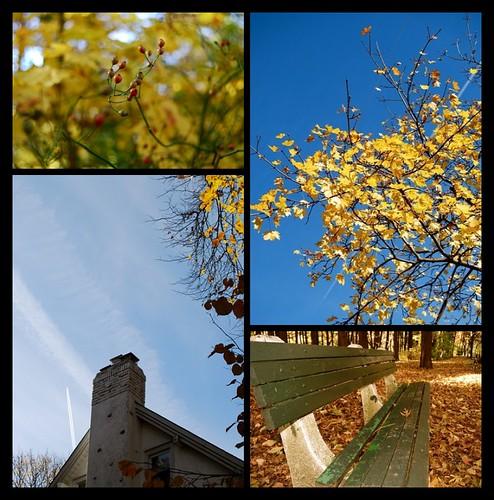 Fall Photo Series Week 8
