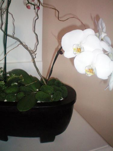 Orchid barrel 012