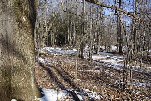 Salamander Pond - Still ice-covered on Sunday