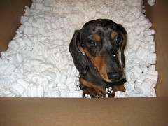 Jackson in a box