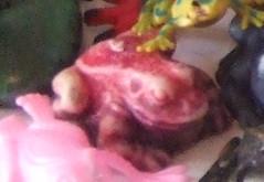 pink wax frog