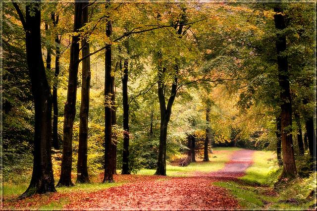 Chopwell Woods, NE England