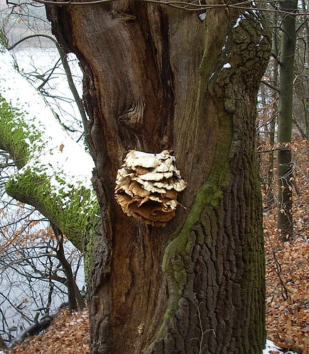 Baumruine mit Pilz