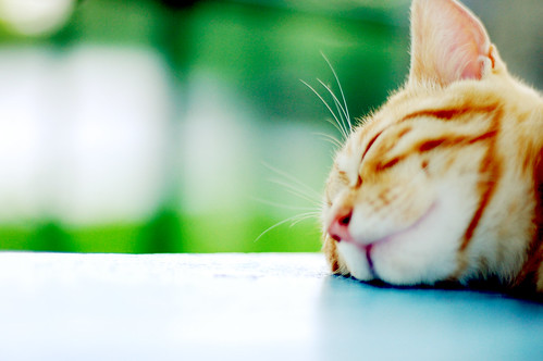 On a beautiful sunny day, leave me alone!! I am sleeping comfortably. Zzz.. Zzz...
