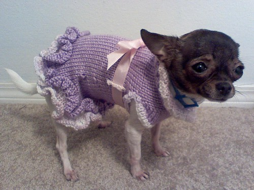 Free Pattern For The A Line Ruffled Dog Sweater Dress