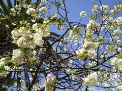 molbourne botanic garden