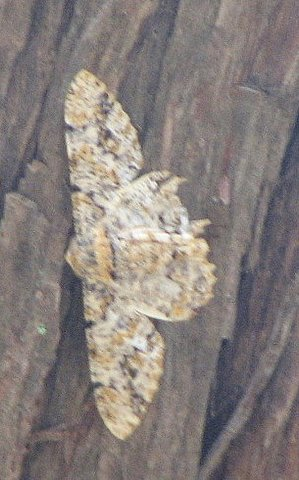 un id moth lalbagh 220308