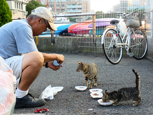 Man feeding abandoned cats