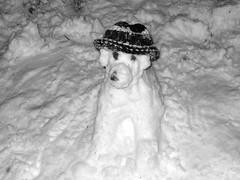Hund, modisch mit Mütze