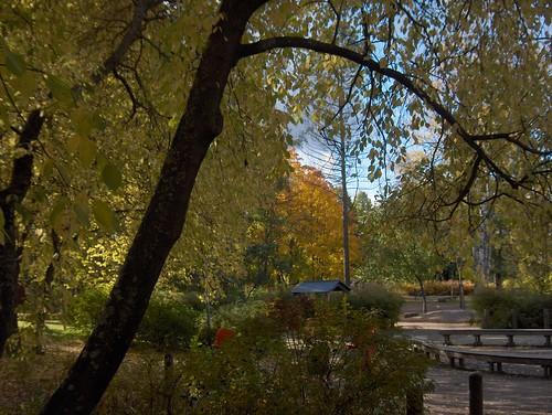 Tree framing the autumnal scene