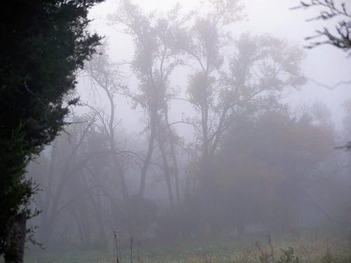 fog 3.jpg