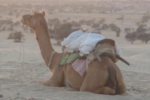 騎駱駝1-60