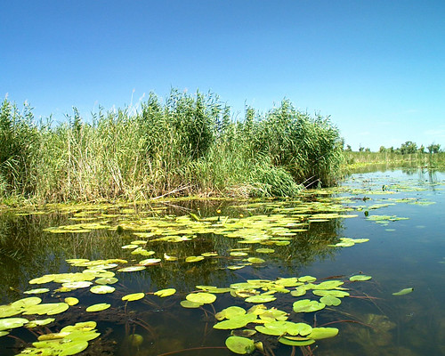 Delta du Dniepr près de Gola Pristan