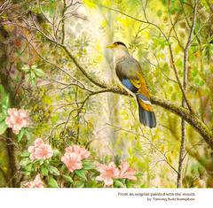 MFPA - bird