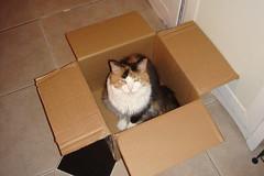 Box o' Blossom