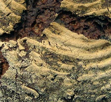 Rye crust closeup