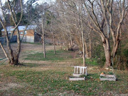 backyard_Jan28_08