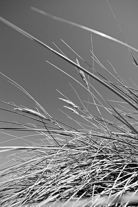 Through the long grass