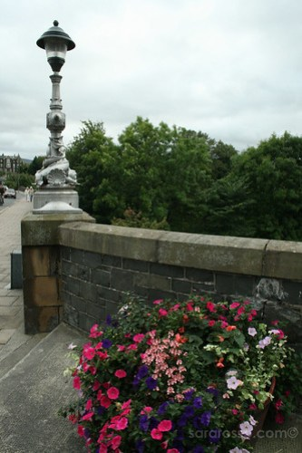 Flowers over the River Tweed, Peebles, Scotland