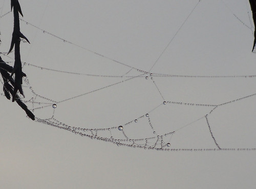 web n water 2 close up.jpg