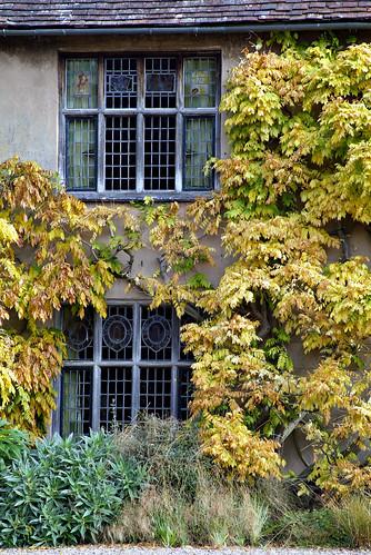 More Autumn leaves Swardy (again)