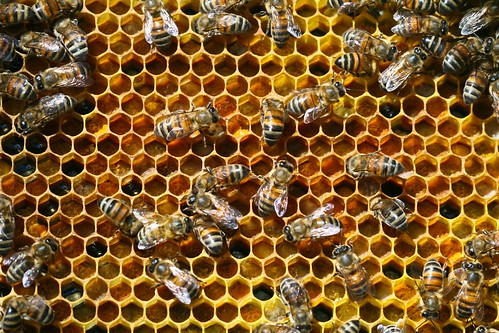 Pollen in Frames