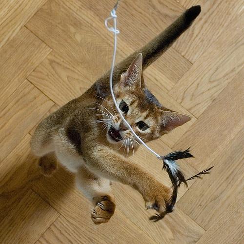 Gato atrapando cuerda